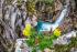 Extreme Canyoning - Medjurecki potok