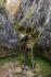 Extreme Canyoning - Belica